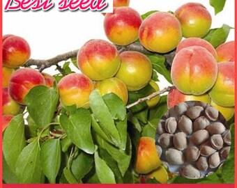 5pcs apricot seeds, garden fruit tree seeds