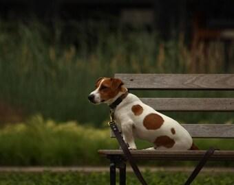 Obedience - Dog Portrait - Photographic Print