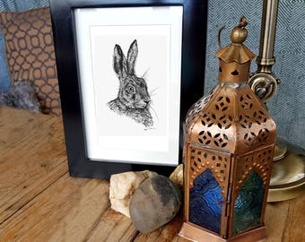 Limited edition print 'Hare'
