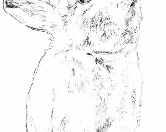 Custom pet portrait ink drawing 5x7 inches
