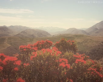 Photo Print - New Zealand Red Rata and Mountains, Wall Art Decor