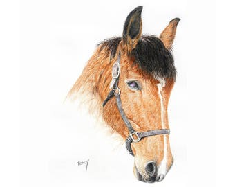 Custom Horse Portrait in Colored Pencils
