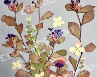 Pressed Flowers Photo 2
