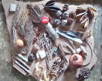 Nature Mix Seed Pods, Shells, Wood, Bone, Feathers, Cactus Skeleton Craft Jewelry Supply Found Objects