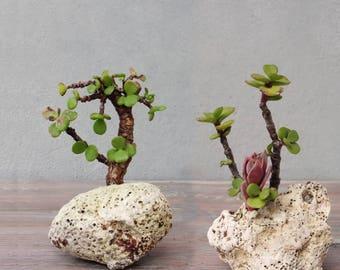 Succulent Plant Pots, Natural Rock Planters, Stone Planters, Hag Stones, Holy Stones, Nautical Beach Home Decor