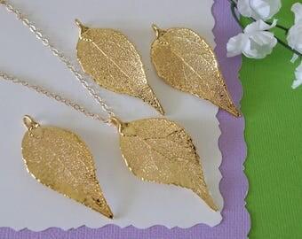 Gold Evergreen Leaf Necklace, Real Leaf Necklace, Evergreen Leaf, Gold Leaf Necklace, Long Leaf, Leaf Pendant LC212