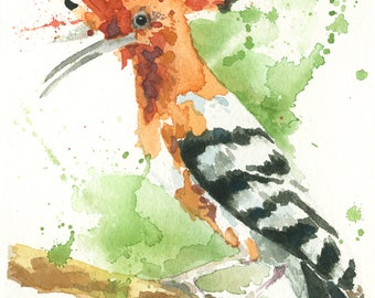 Hoopoe bird from Israel