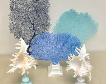Beach Decor - Natural Painted Sea Fans and Shells on Pedestals - Choose Ocean Blue, Aqua, or Navy Blue - coral, coastal, nautical, ealife