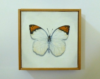 Great Orange Tip Butterfly Painting