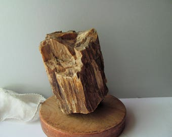 Petrified Wood Rock Stone Wood Branch Bark Fossil 4 Pounds Rock Collection Streaked Layers Neat Angles Multicolored Fathers Day Gift Geology