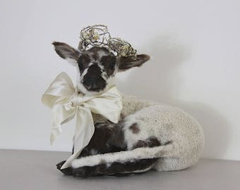 Vintage Taxidermy Lamb, Jeanne D'arc Living, Nordic Decor,  Brown White Sheep