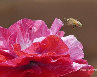 Read Flower and Bee Photography, WIldlife Photography, Nature Photography, Butterfly, Garden Photography, Flower Photography