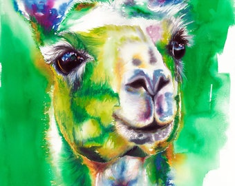 Llama Watercolor Fine Art Print on Paper, Metal or Bamboo
