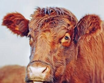 Highland Cow Art, Animal Photography, Cow Print, Farm Animals, Scottish Highlands, Cow Photography, Animal Print Art, Farm Art