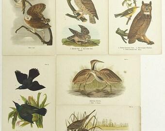 Vintage bird book plates, Barn owls, Warbler, Snipes, Bittern, Grackle, Ornithology prints, Wildlife, Wildfowl
