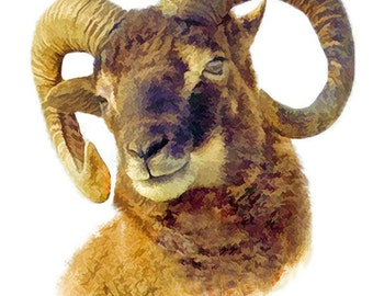farm animal print, soay sheep print, farmhouse print, animal art print, country print, digital art print, farmyard animals, wall art prints