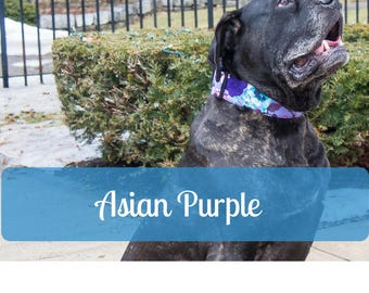 Purple Violet Flower Girl Cotton Dog Collar for Mastiff Great Dane Doberman Pitty Big Dog by LaVilla