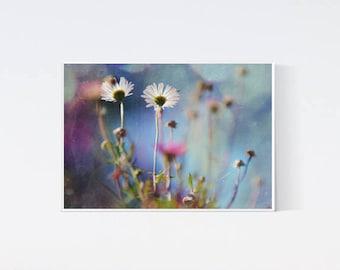 Printable art - Flower print - Wild flowers photo - Flowers downloadable - Digital photography - Instant download - Digital daisy art - 5x7