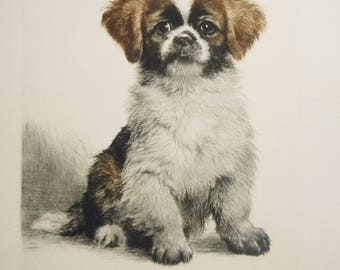 Dog Engraving /  Kurt Meyer Eberhardt / Authentic Early Print found in Antique Portfolio / Copper Plate / 2 Color