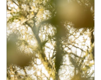 tangled spring