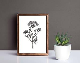 Meadow Parsley - Ink Print