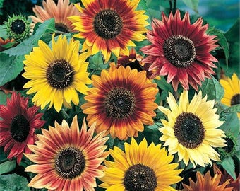 Let It Grow Seed Packs -Organic Assorted Sunflower Seeds