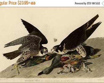 40% OFF SALE Poster, Many Sizes Available; Great Footed Hawk Audubon