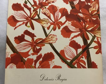 Delonix Regia (Flamboyant) Bernard & Harriet Pertchik 1951 Print from Flowering Trees of the Caribbean Alcoa Steamship