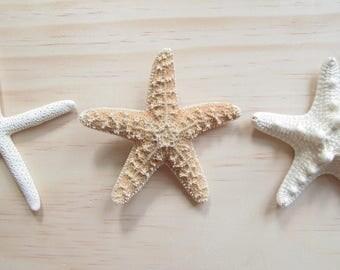 Boutonniere-Starfish Boutonniere-Beach Wedding-Wedding Decor-Bride-Groom-Wedding Accessories-Coastal Boutonniere-Ocean-Seashell Boutonniere