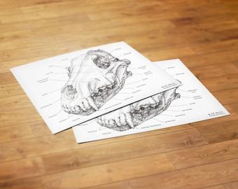 Wolf Skull Diagram (5x7 Postcard)