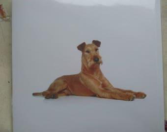 Irish Terrier greetings card