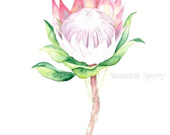 Watercolor Protea   Print of a Watercolor Painting   Mother's Day Wedding Birthday Valentine's Gift