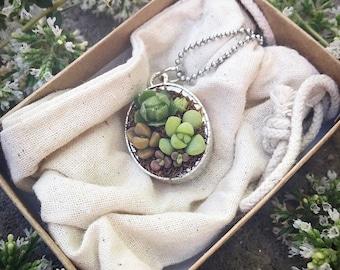 Real Succulent   Living Succulent   Plant Pendant Necklace   Cactus Necklace