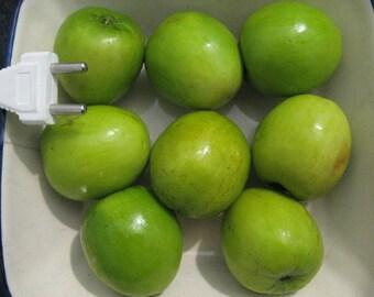 "Ziziphus Mauritiana ""Giant"" +75 gram fruits / Indian Jujube - 5 seeds"