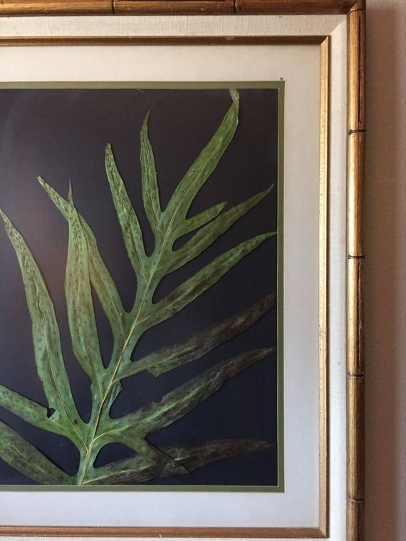 Laua'e Fern Herbarium -Tropical Foliage- Large Framed Tropical Plant Art- Pressed Botanical- Botanical Decor- Vintage Gold Bamboo Frame-
