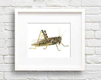 Grasshopper - Art Print - Wall Decor - Watercolor Painting