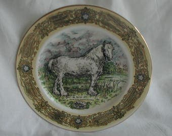 """Vintage Shire Horse Plate """"Barrel"""" Samuel Smith's Horse by Jenny Hinchliffe"""
