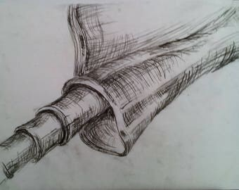Cinnamon Stick Study