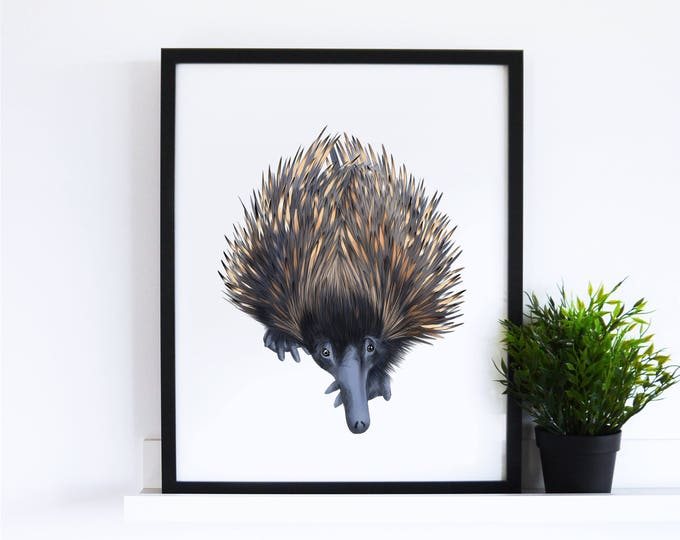 The Echidna // White Collection
