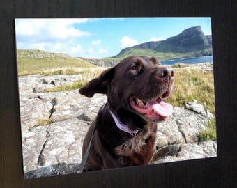 Cocoa the Labrador Flappy Ears A6 Greetings Card