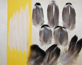 CC4 - Natural duck Mallard feathers brown/beige 3.7/10cms X 7paires + 8plumes (cc4))