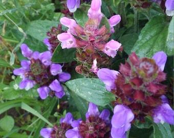 Medicinal Prunella Herb Seeds, Edible Prunella Herb, Prunella Flower Seeds, Medicinal Herbs, Organic Herb Seeds FREE SHIPPING in U.S.