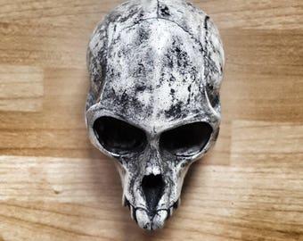 Monkey skull resin cast - faux taxidermy oddity