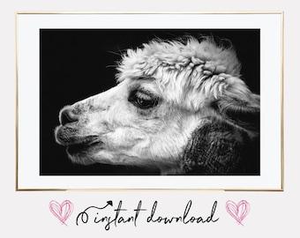 alpaca poster print, llama print, alpaca print, alpaca print wall art, alpaca printable, printable art, alpaca photo, downloadable prints
