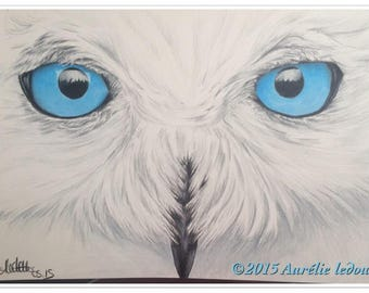 SNOWY OWL pet portrait in color