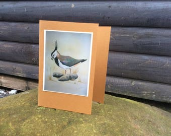 Lapwing card, vintage look card, Easter card, Mother's Day card, birthday card, Thankyou card, blank card, just to say card,