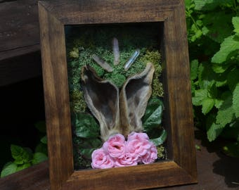 Spirit Of The Forest Shadow Box