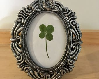 Real Four Leaf Clover in Small Silver Victorian Frame (Oval)