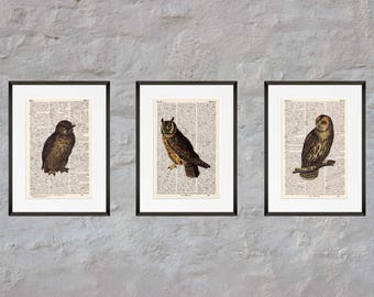 Prints set of 3 - owls - Antiquarian Book page