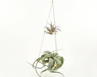Himmeli Double Chained No02 inklusiv 2 Luftpflanzen Pflanzenampel Blumenampel Geometrisch Minimal Dekoration Golden Air Plant